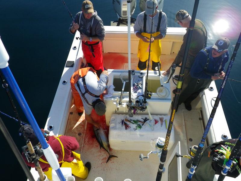 Westport Albacore Tuna Fishing