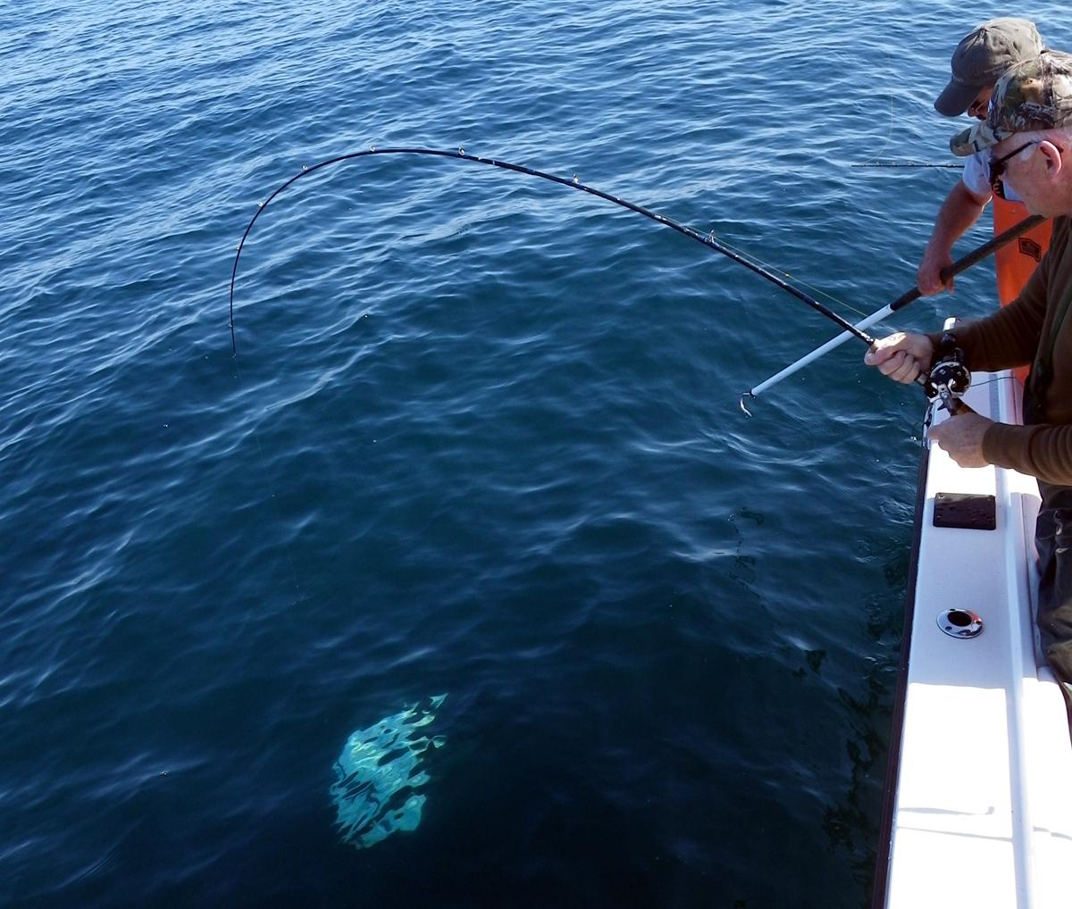 Catching Albacore Tuna in Westport