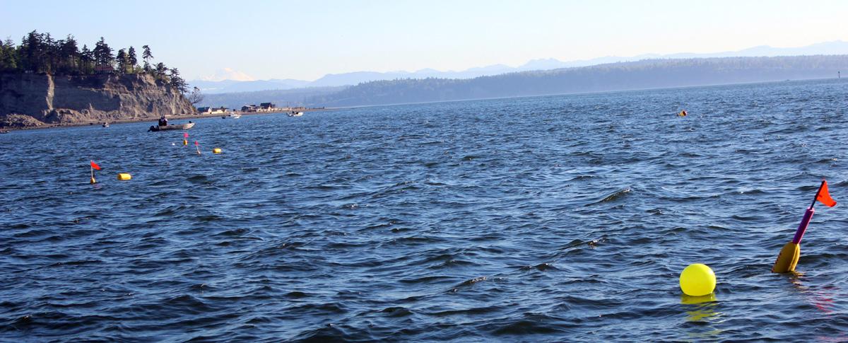 Hat Island in Puget Sound, Washington.