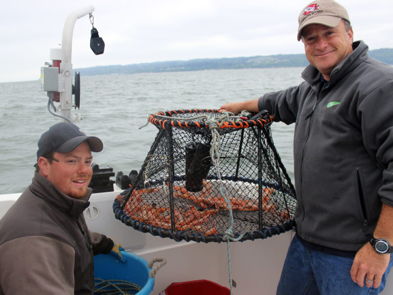 Puget Sound Spot Shrimp.