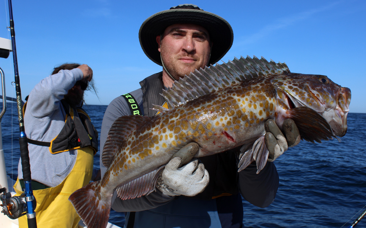 Westport Deep Water Lingcod