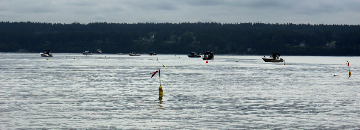 Shrimping Hood Canal