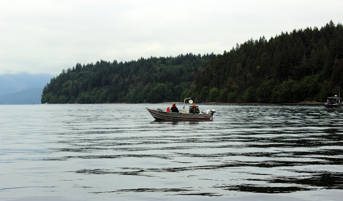 Shrimping Boat Hood Canal