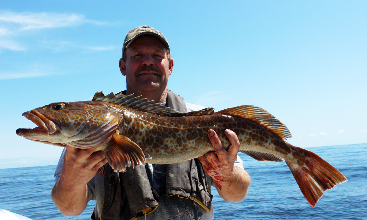 Westport Halibut Lingcod Fishing
