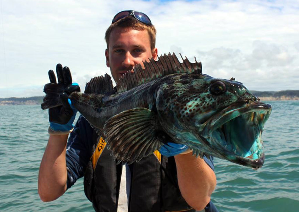 How to Catch Lingcod