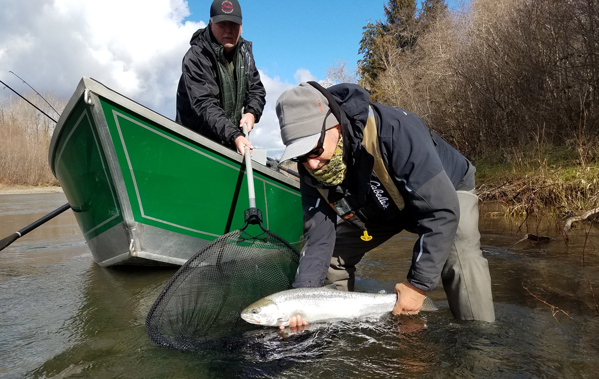 Guide Ian's trips are so hands on and fun! Here his clients net and release a healthy Wild Steelhead.