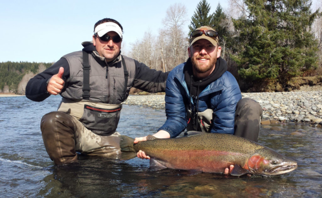 Wild Steelhead have beautiful markings late in the winter as they prepare to spawn.