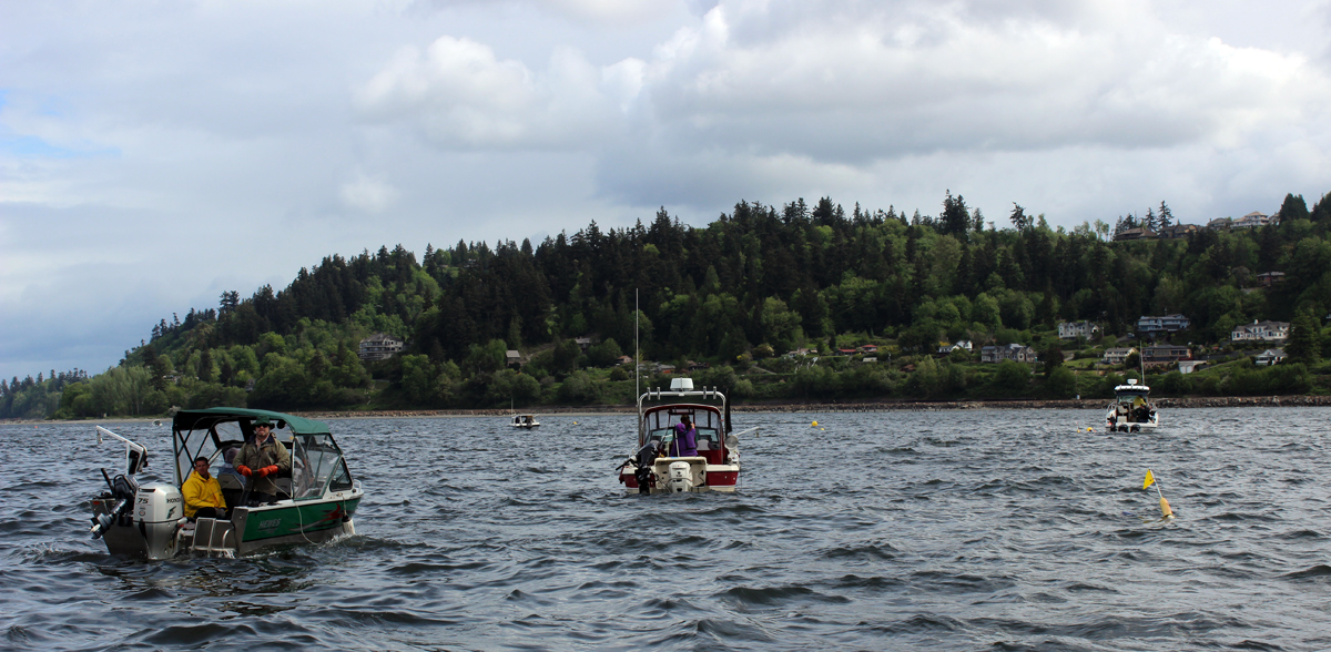 Shrimping in Puget Sound