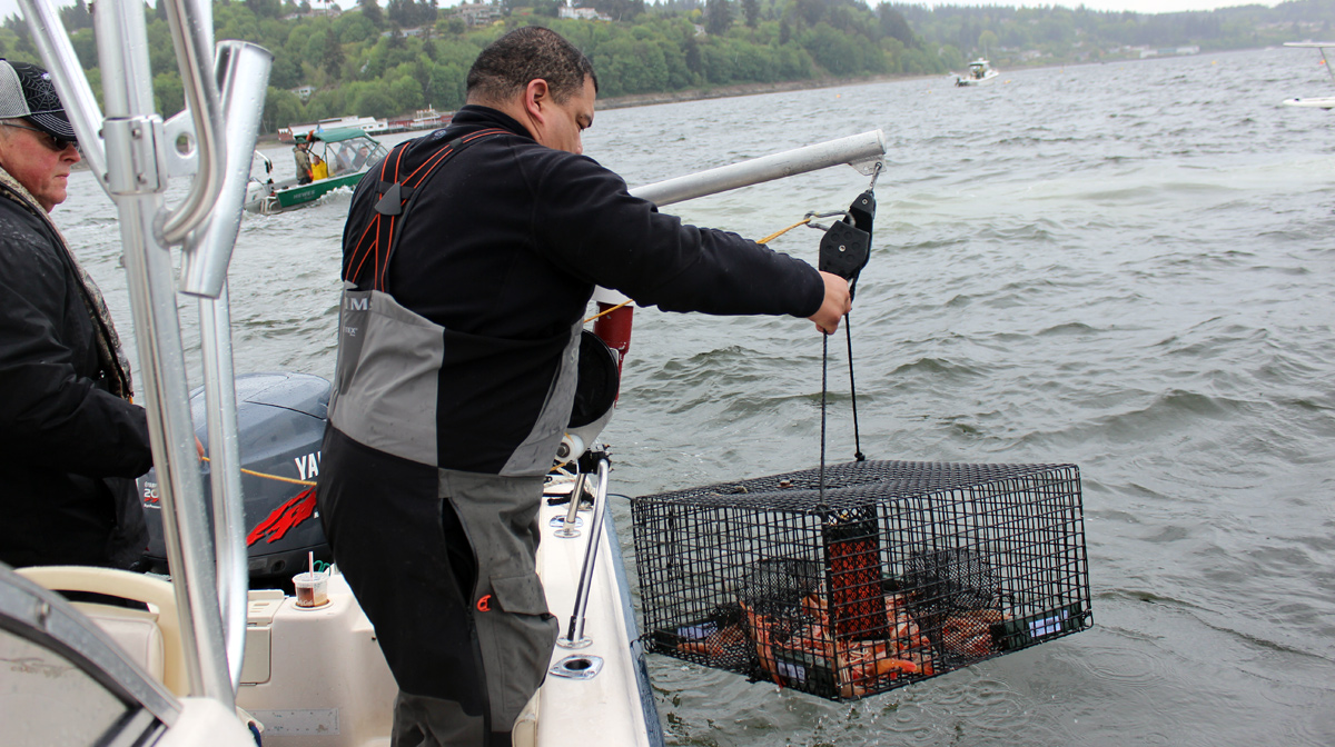 Puget Sound Shrimping