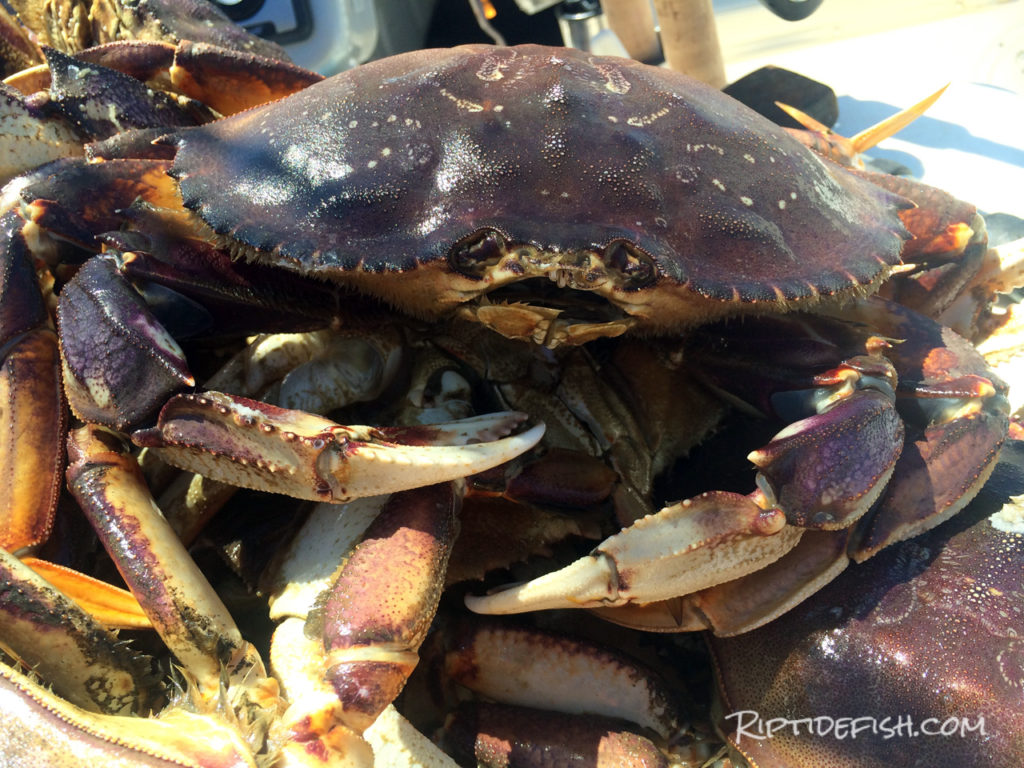 Rigging and Setup for Dungeness Crab