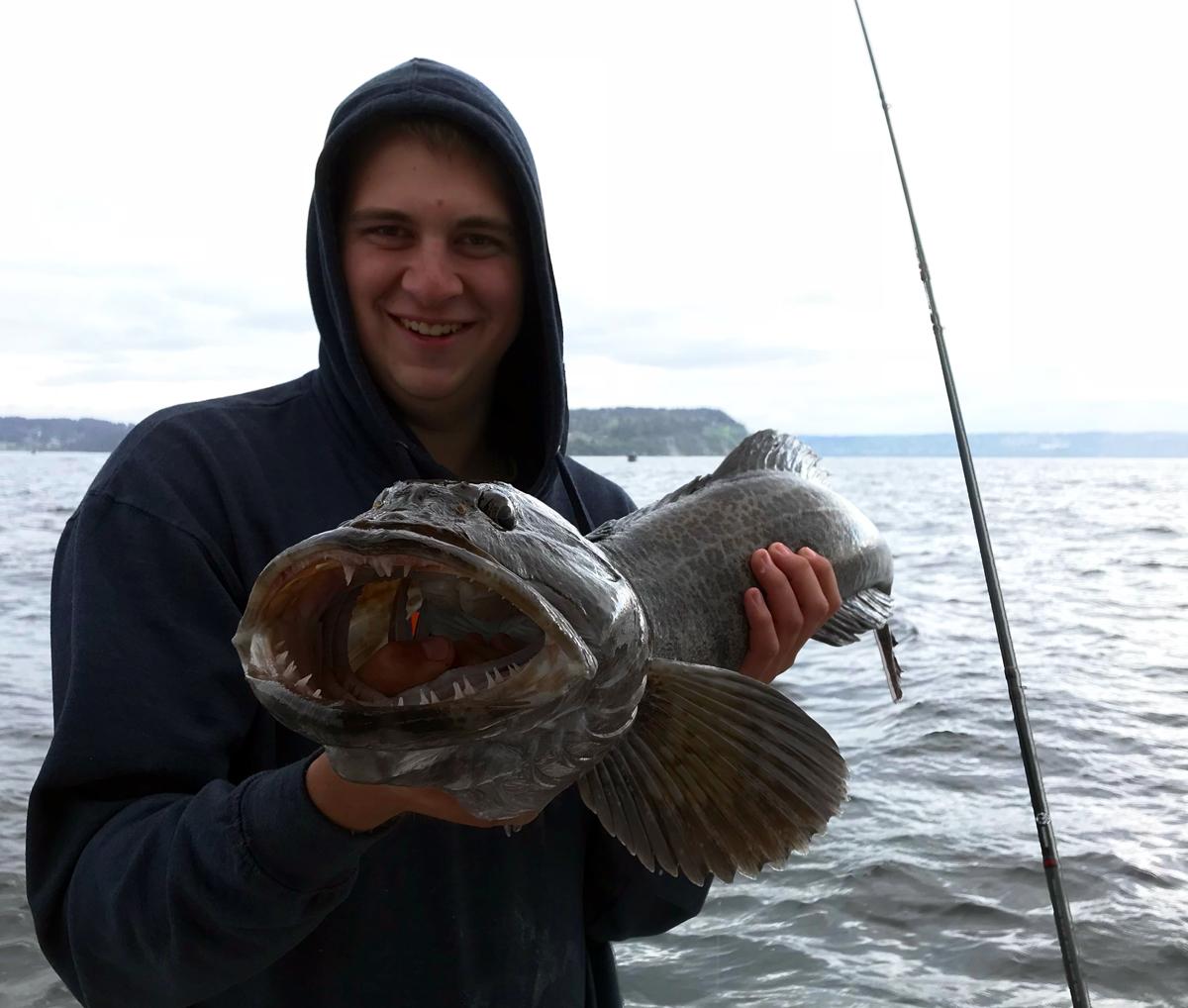 Puget Sound Lingcod