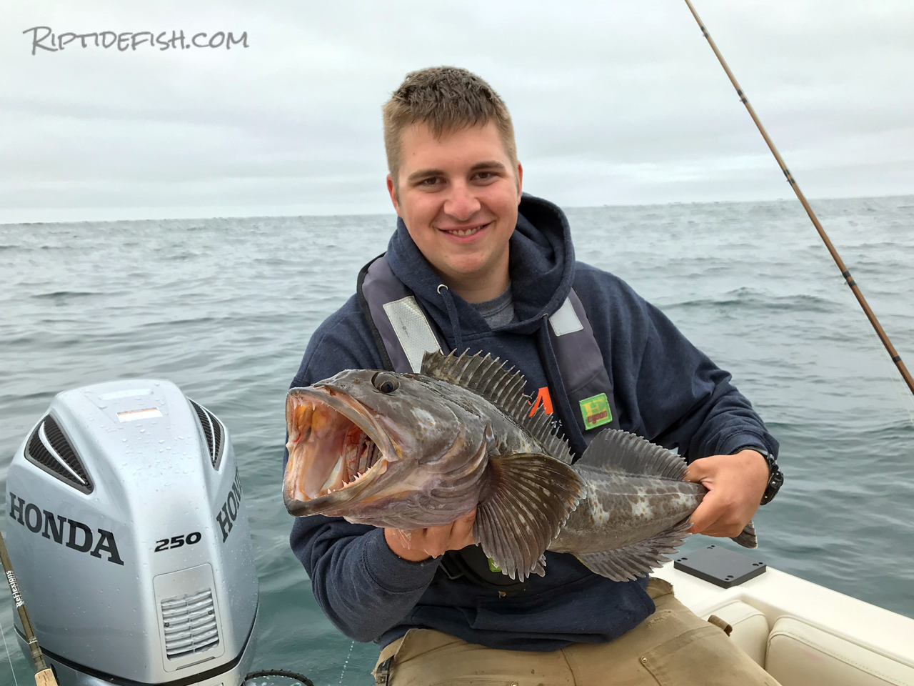 Westport Lingcod Fishing