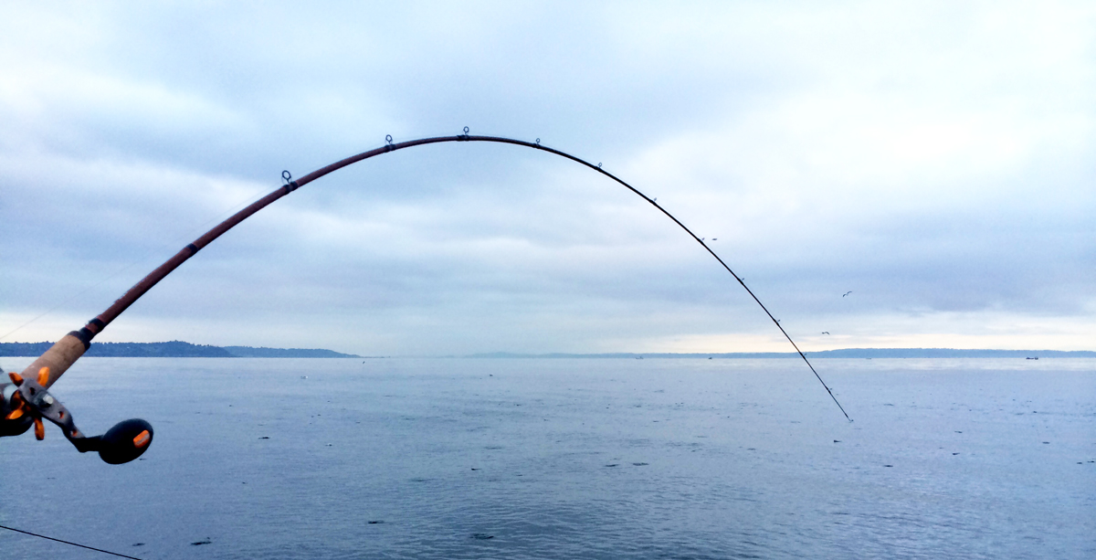 Salmon fishing herring