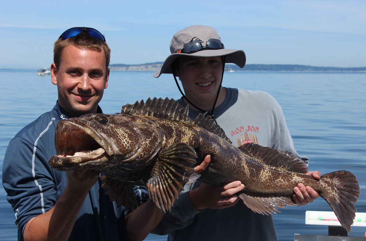 Monster Puget Sound Lingcod