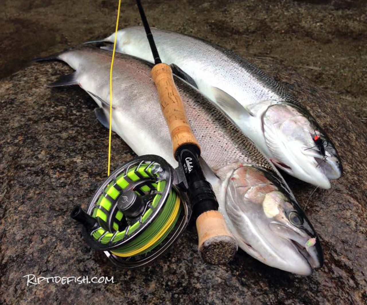Fly Fishing Summer Steelhead