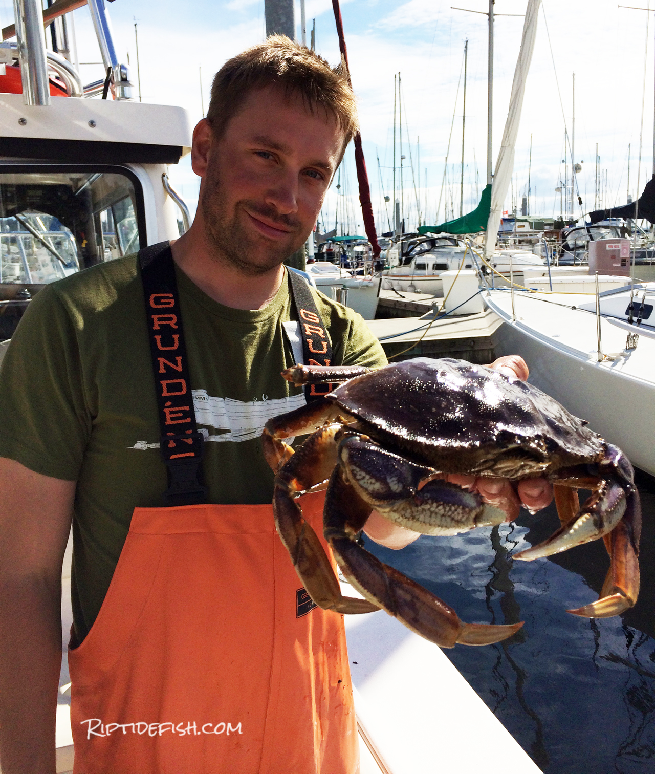Fresh caught Dungeness Crab