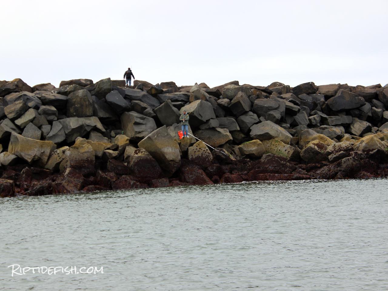 Washington Jetty Fishing Lingcod