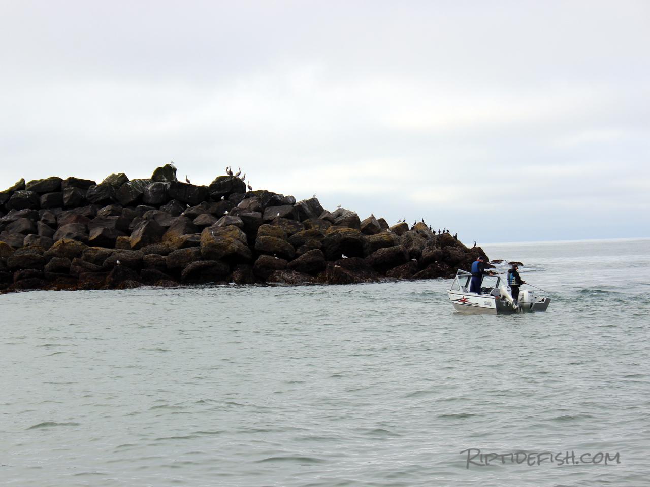 Westport Jetty Fishing Lingcod