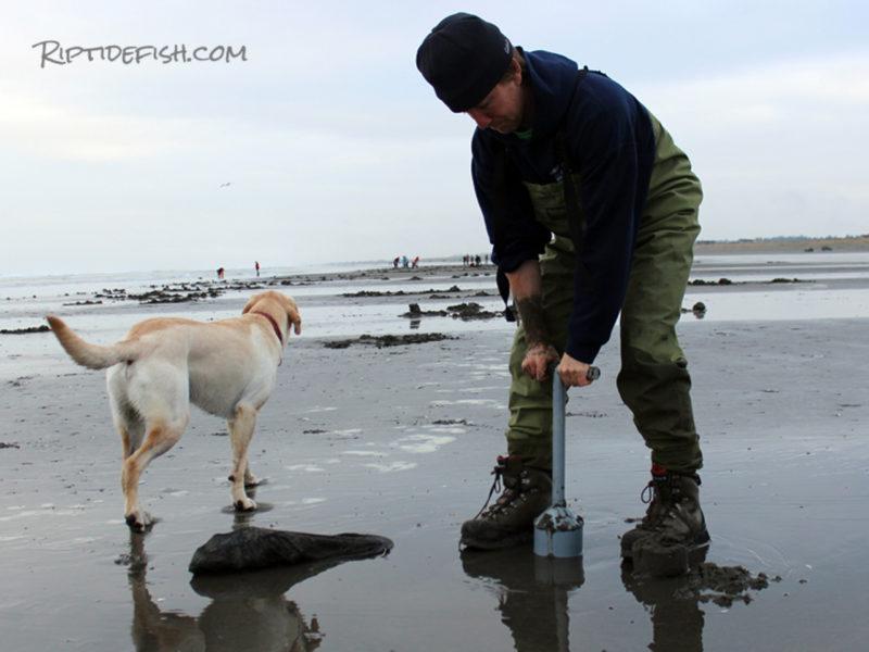 Razor Clam Digging