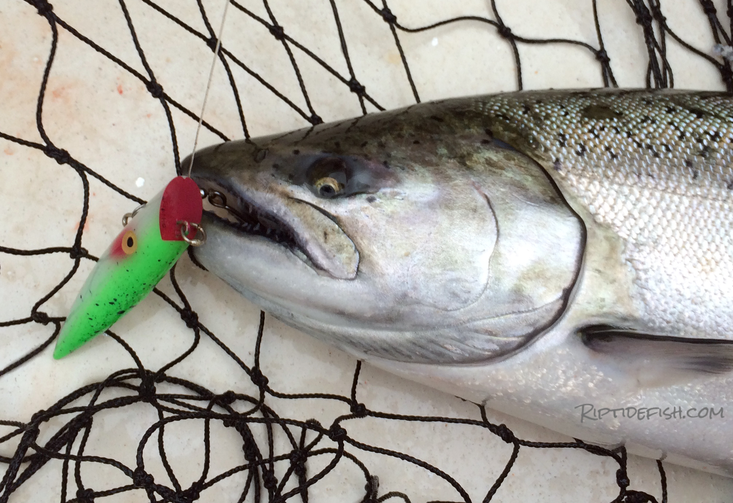 Puget Sound King Salmon Fishing Lures