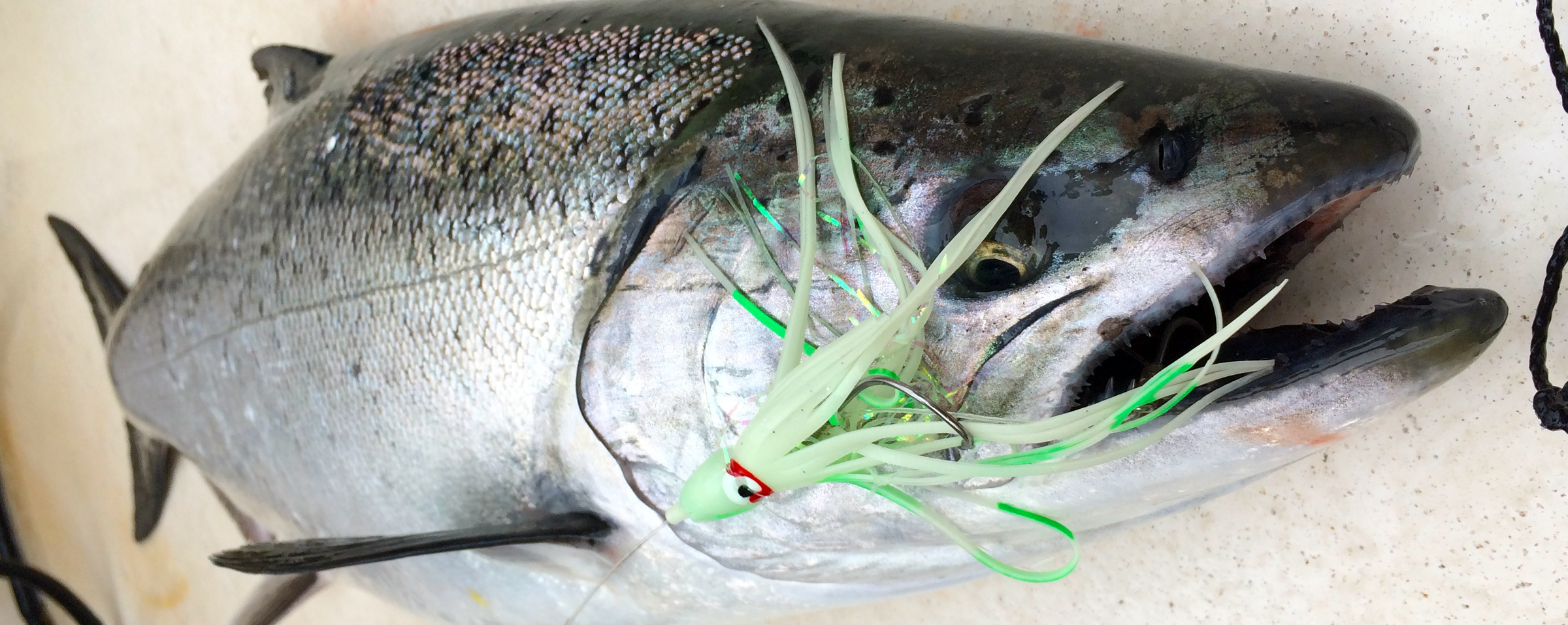 12 Great Lures for Chinook Salmon Fishing in Puget Sound