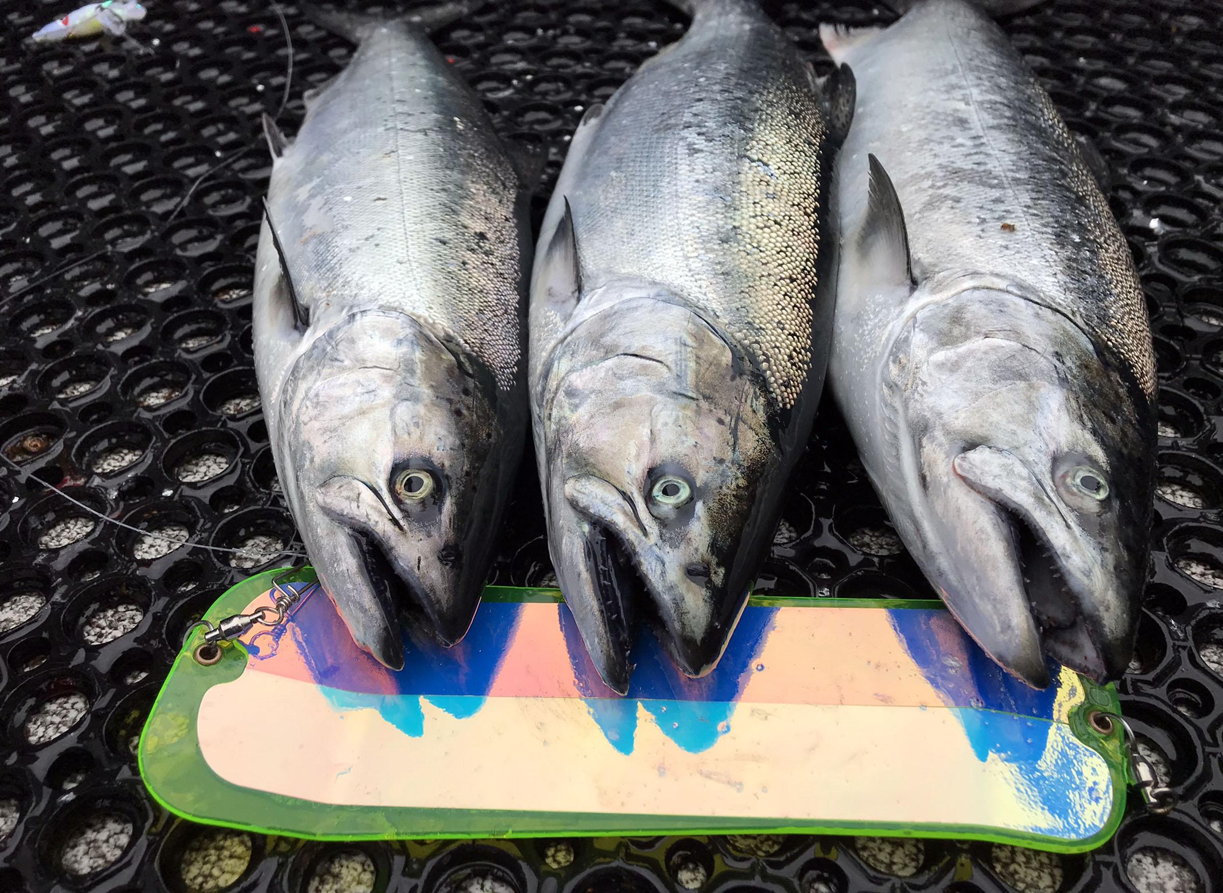 Gibbs Salmon Flasher