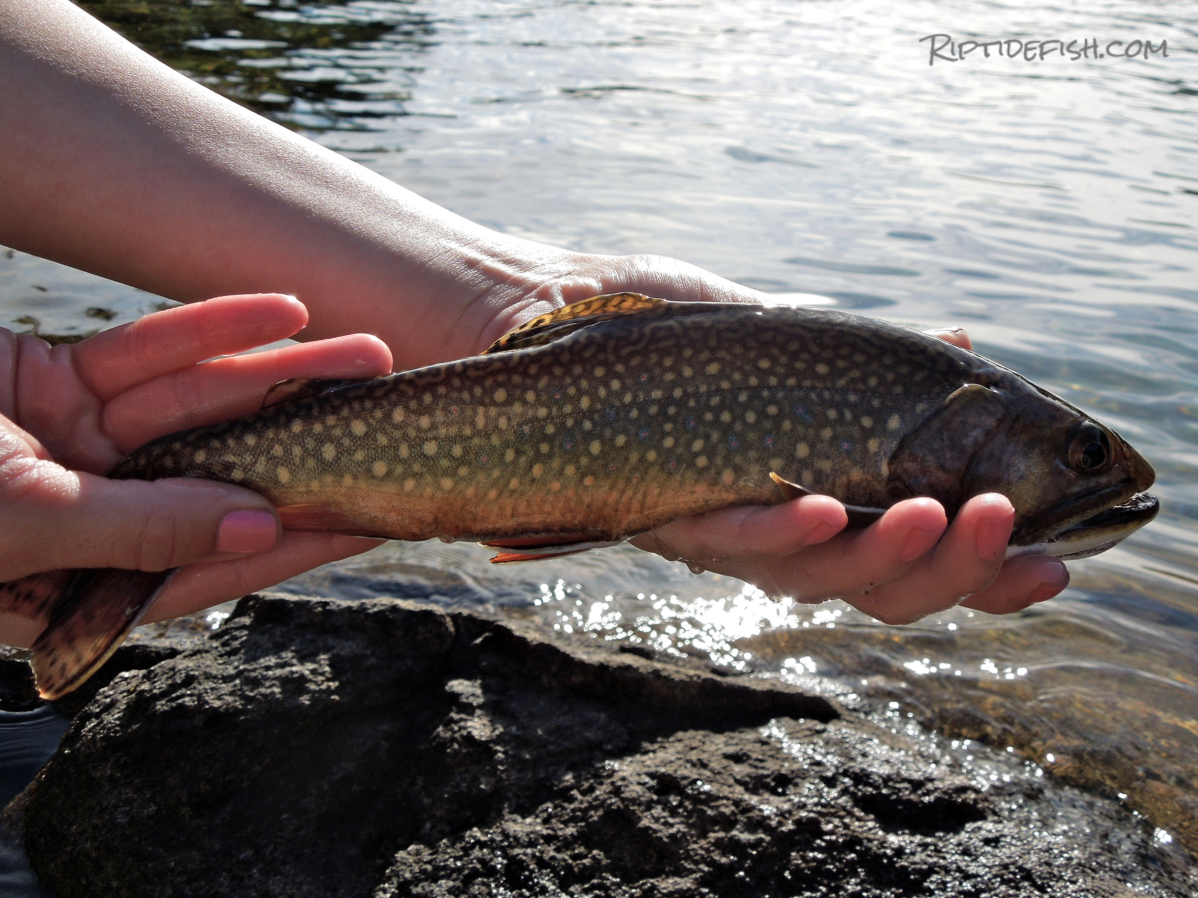 Washington Brook Trout Fishing
