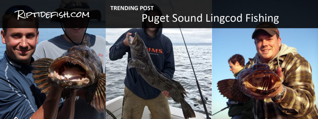 Puget Sound Lingcod Fishing