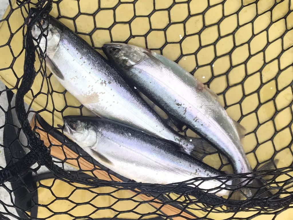 Lake Stevens Kokanee Fishing - Riptidefish