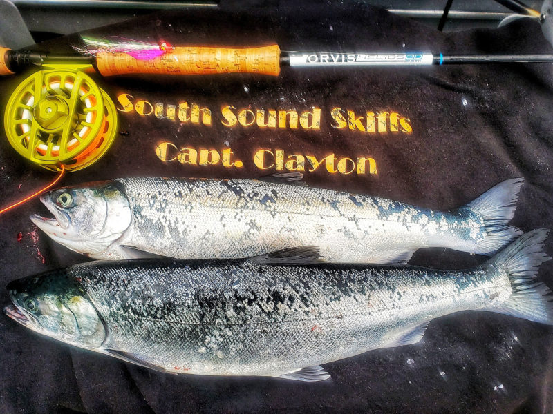 Fly Fishing Coho Salmon Saltwater