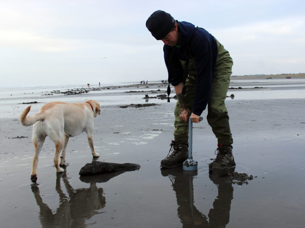 Washington Razor Clam Digging