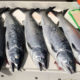 Marine Area 10 Salmon Fishing Report