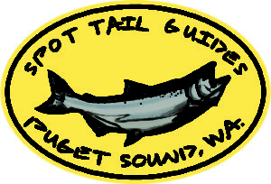 Spot Tail Salmon Guide