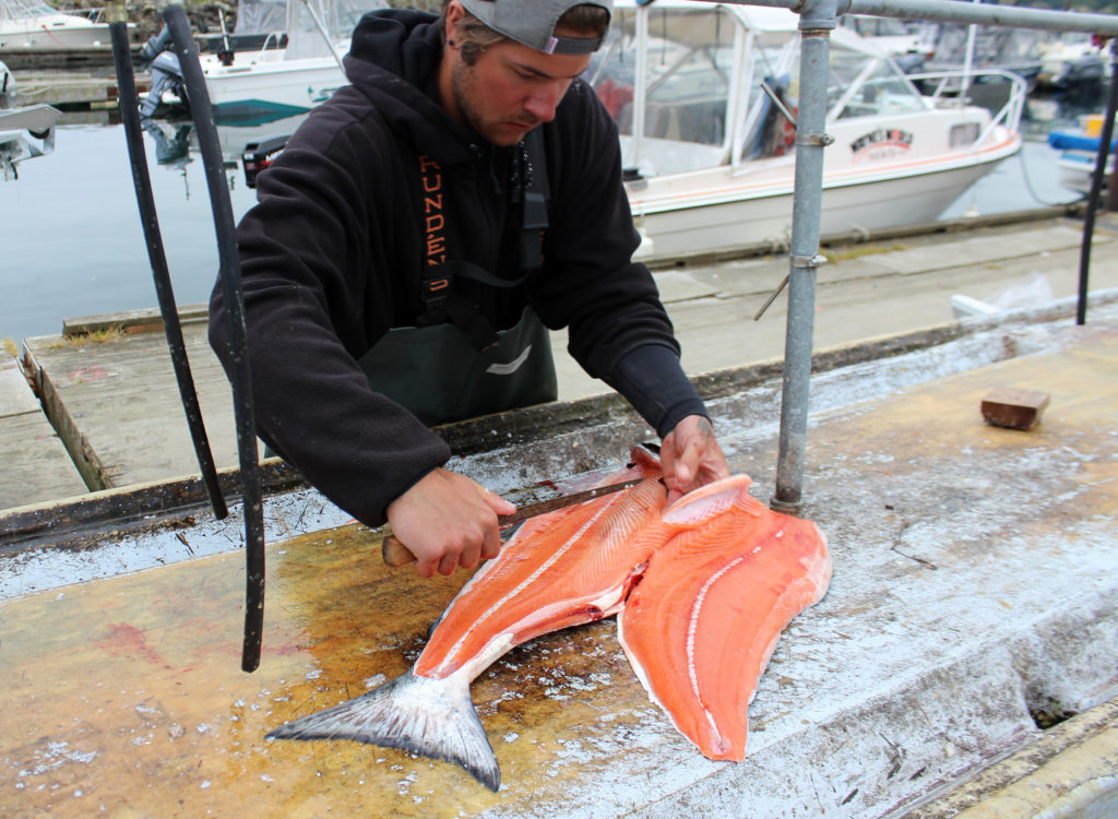 Chinook Salmon Canning Smoking Jarring