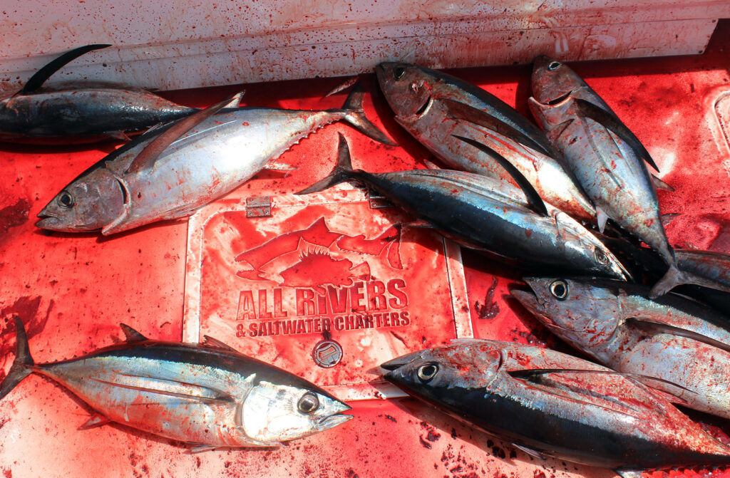 Albacore Tuna Fishing Westport