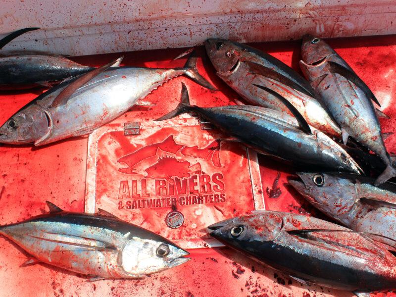 Albacore Tuna Fishing Westport
