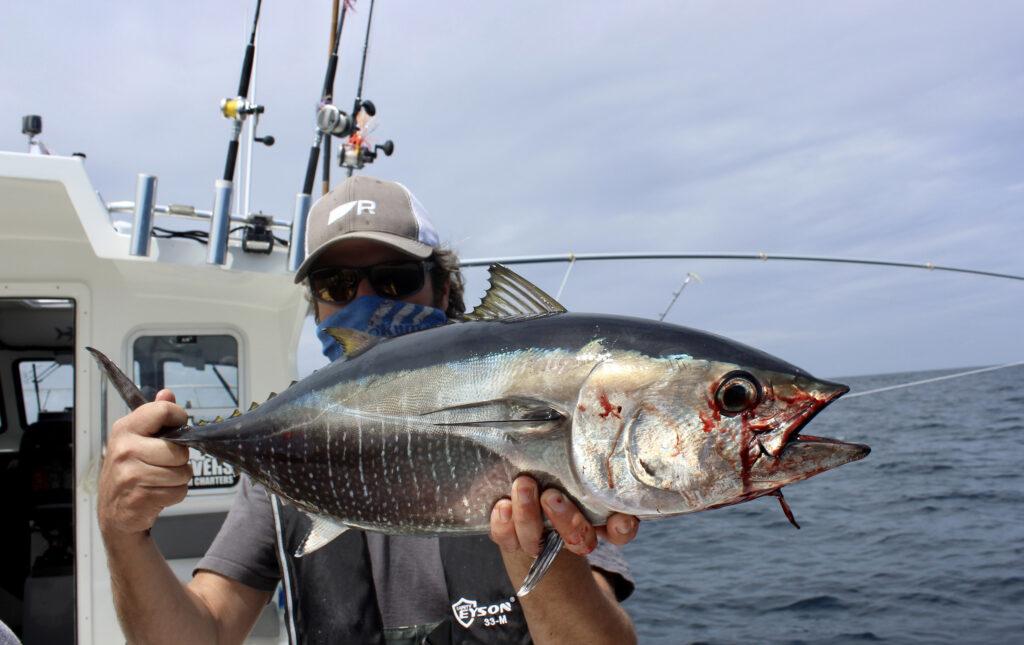 Westport Washington Bluefin Tuna