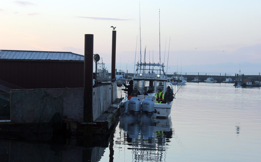 Albacore Tuna Fishing Westport Washington