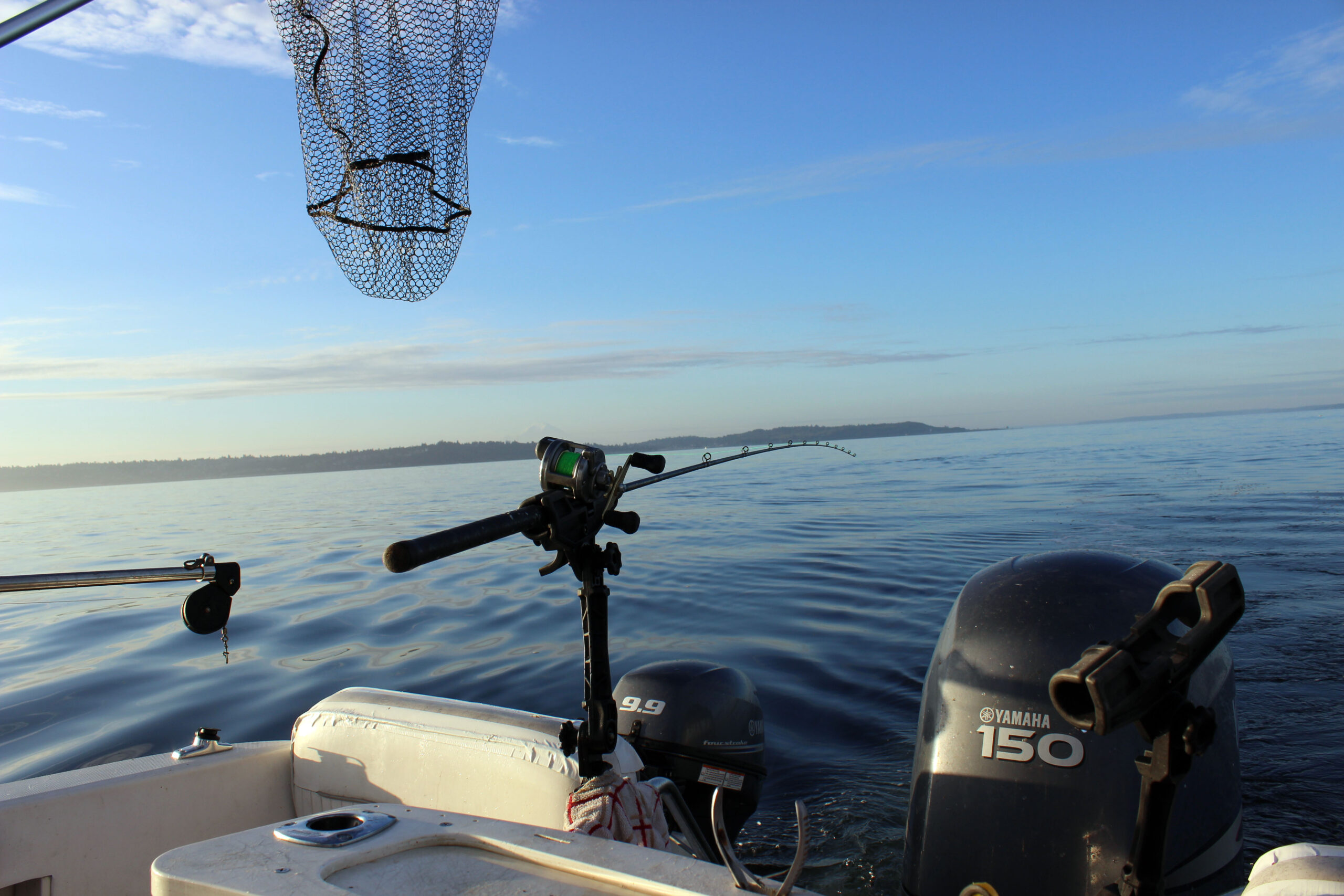 Puget Sound Coho Salmon Report