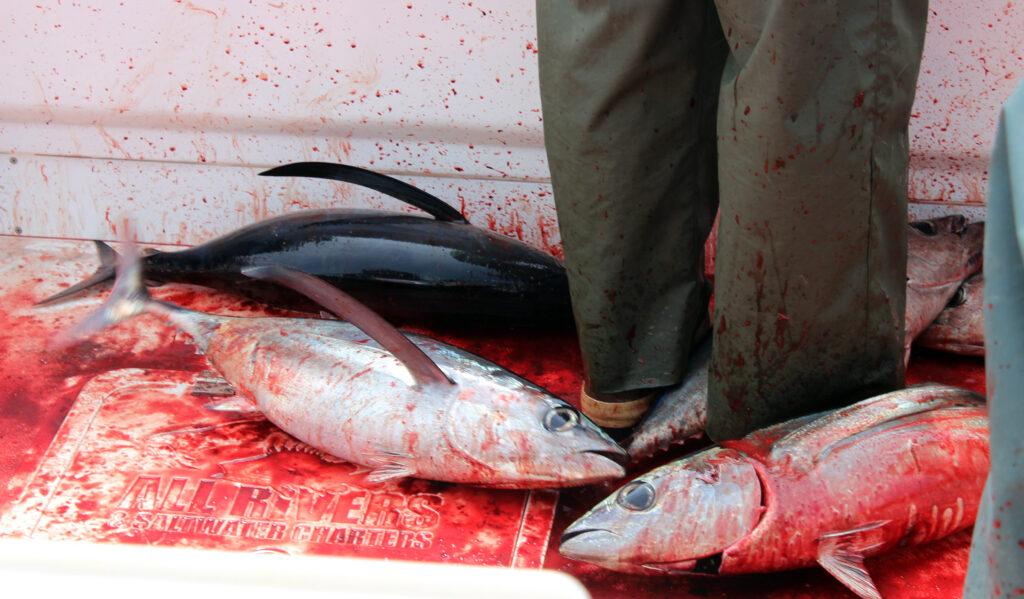 Westport Washington Tuna Fishing