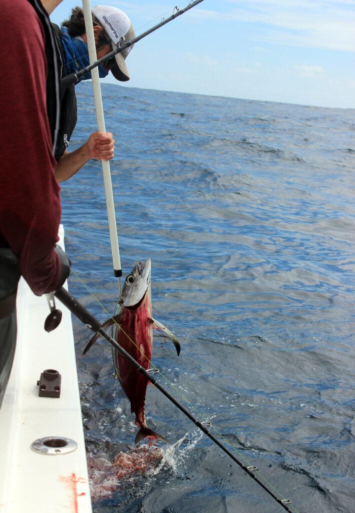 Albacore Tuna Fishing Washington State