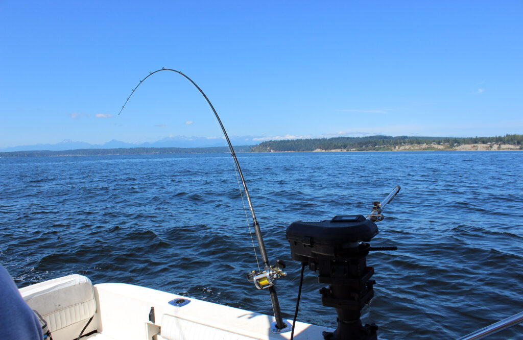 Puget Sound Coho Salmon Trolling with Downriggers