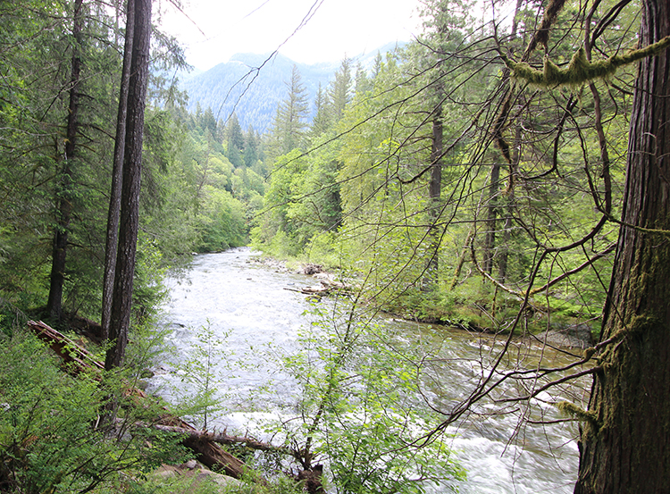 North Fork Snoqualmie River trout fishing.