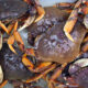 Puget Sound Winter Dungeness Crabbing