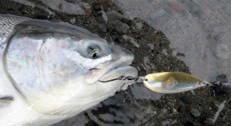 steelhead fishing lures