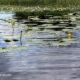 Lake Alice Fishing