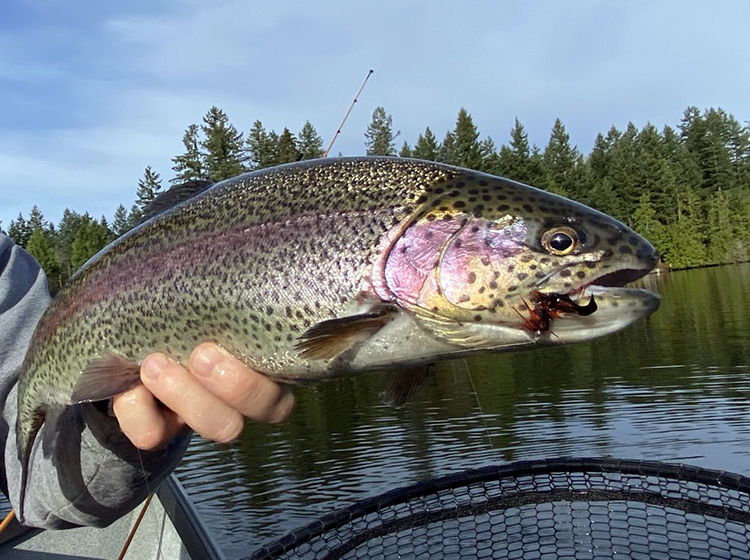 Best Trout Fishing Lures Pacific Northwest