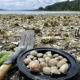 Hood Canal Clam Digging
