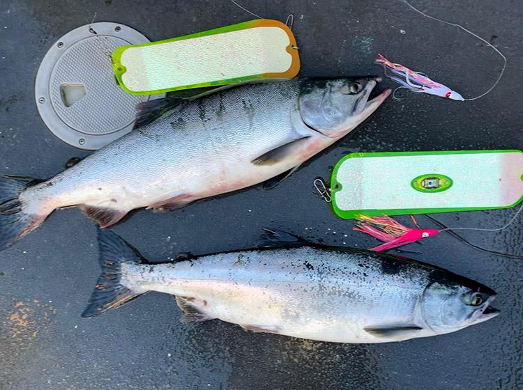 Pink Salmon Fishing Puget Sound