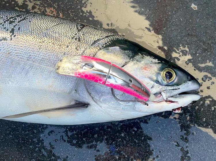 Pink Salmon Fishing